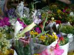 100円市 花